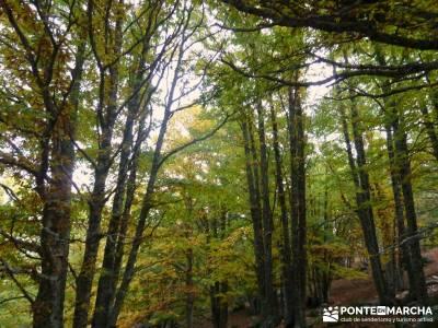 El mágico Castañar de El Tiemblo; rutas de montaña por madrid senderismo principiantes madrid sen